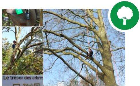 nos réalisations arbres